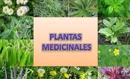 """Conferencia """"Plantas medicinales"""""""